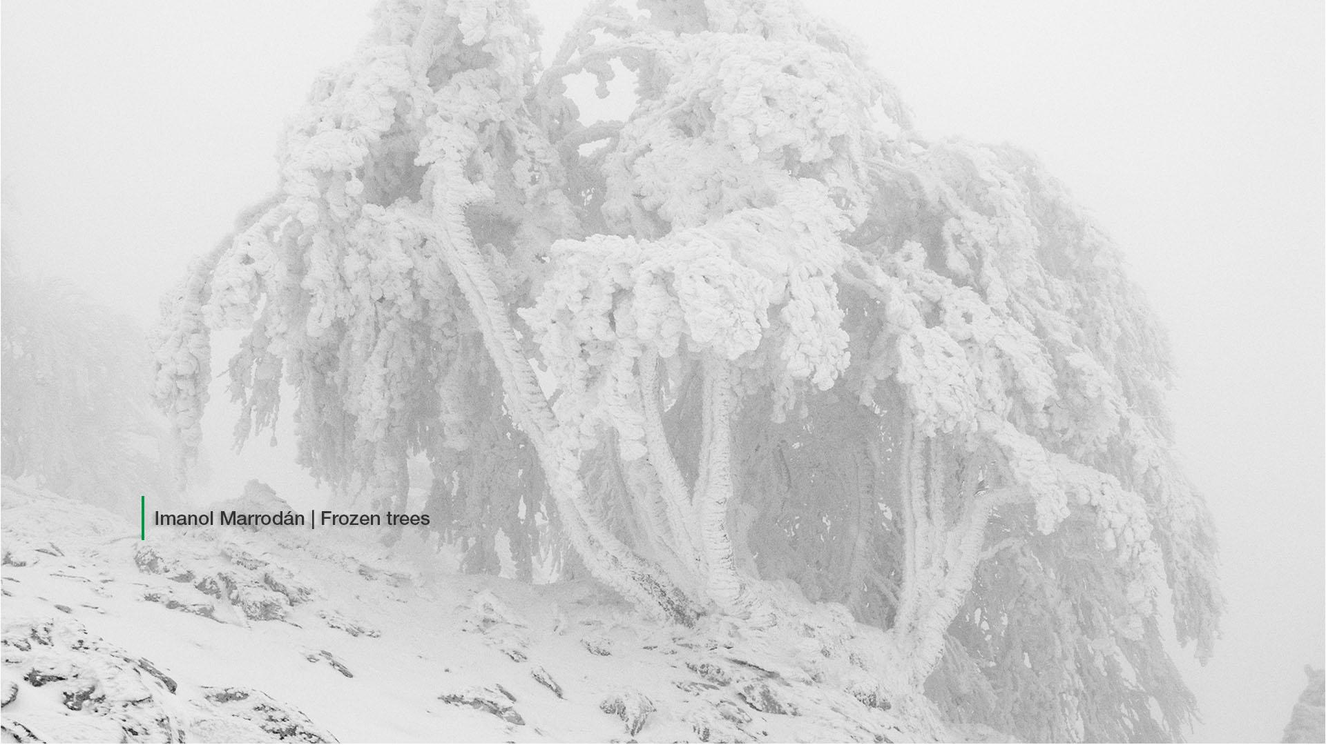 SLIDER 8 Imanol Marrodan Frozen Trees